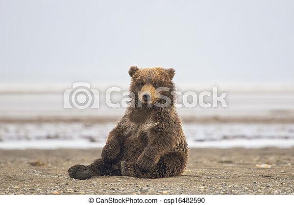 brun, petit, ours - csp16482590