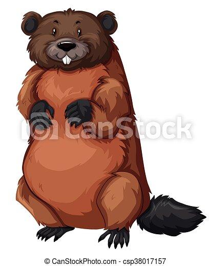 castor, fourrure, brun - csp38017157