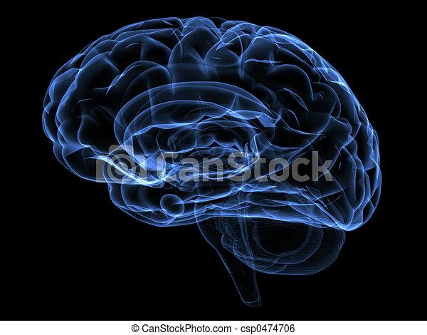 cerveau - csp0474706
