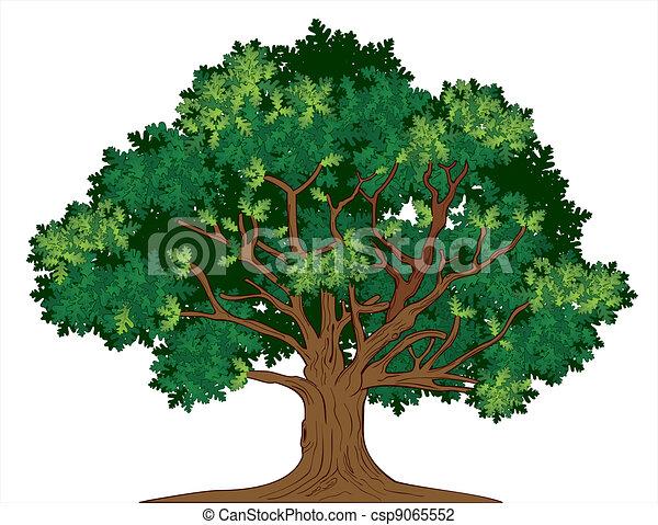 chêne, vecteur, arbre - csp9065552