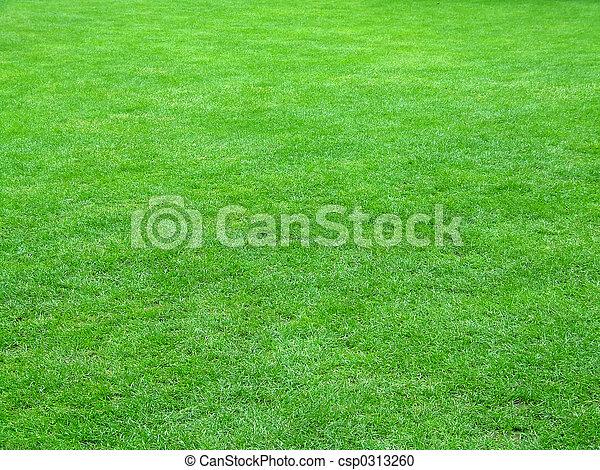 champ, football, herbe - csp0313260