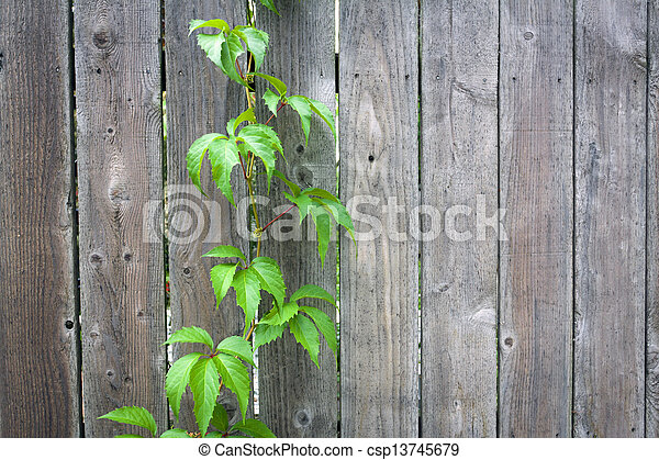 clôture bois - csp13745679