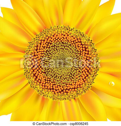 closeup, tournesol - csp8006245