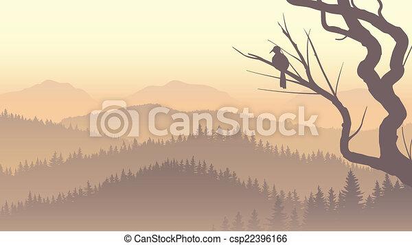 conifère, fog., bois, matin - csp22396166