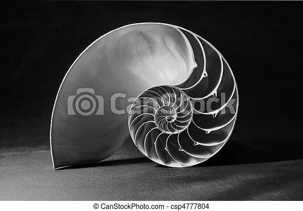 coquille, modèle, nautile, noir, blanc, géométrique - csp4777804