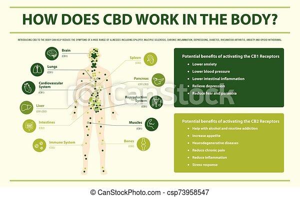 corps, infographic, horizontal, cbd, travail, comment - csp73958547