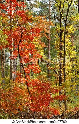 couleurs, automne - csp0407760