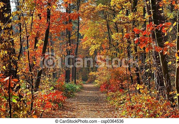 couleurs, automne - csp0364536