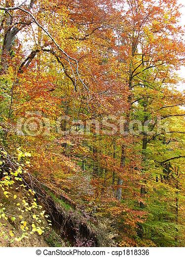 couleurs, automne - csp1818336