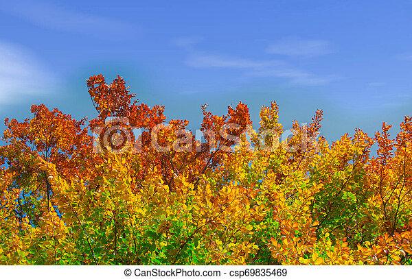couleurs, automne - csp69835469