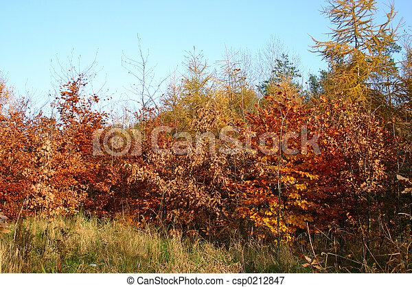 couleurs, automne - csp0212847
