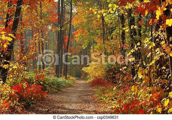 couleurs, automne - csp0349631