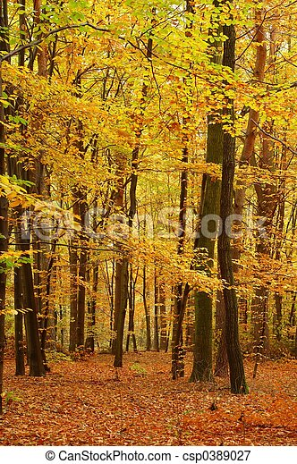 couleurs, automne - csp0389027
