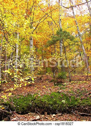 couleurs, automne - csp1818327