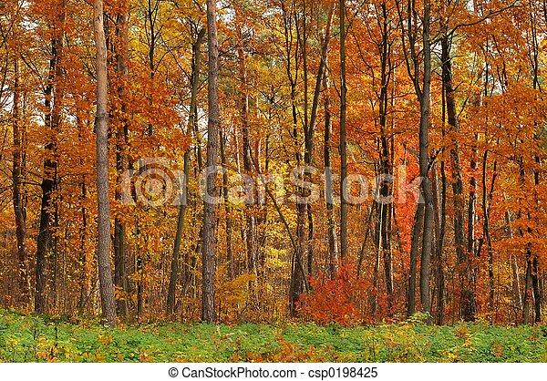couleurs, automne - csp0198425