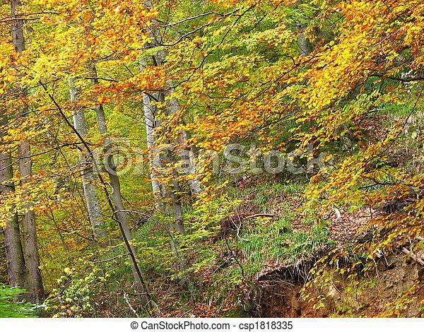 couleurs, automne - csp1818335