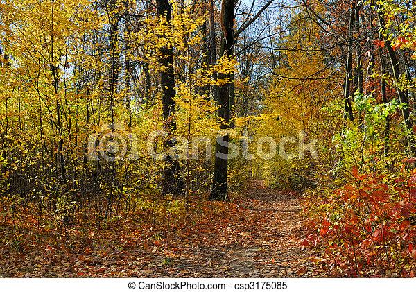 couleurs, automne - csp3175085