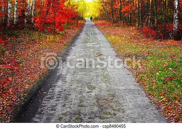 couleurs, automne - csp8490455