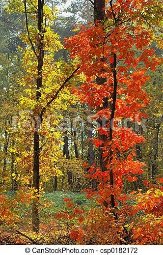 couleurs, automne - csp0182172