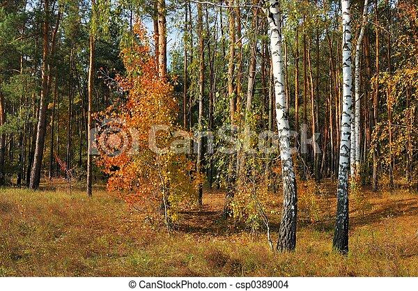 couleurs, automne - csp0389004