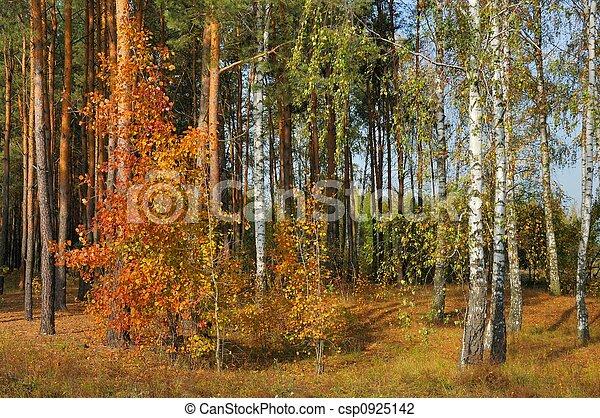 couleurs, automne - csp0925142
