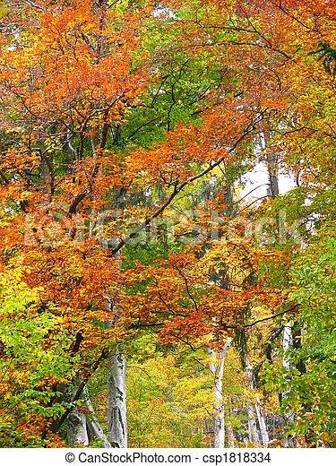 couleurs, automne - csp1818334