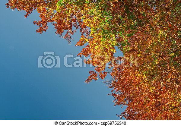 couleurs, automne - csp69756340