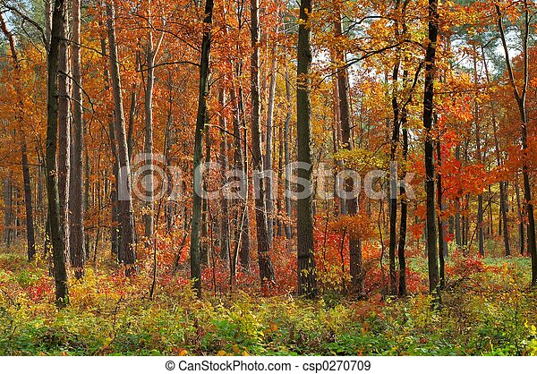 couleurs, automne - csp0270709