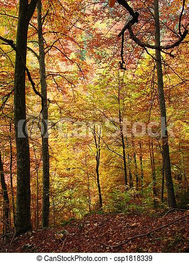 couleurs, automne - csp1818339