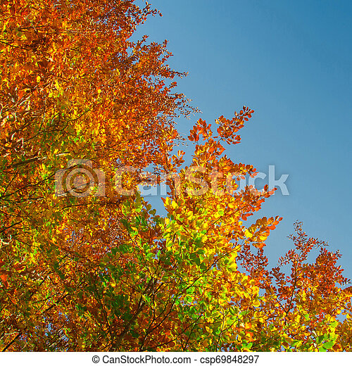 couleurs, automne - csp69848297