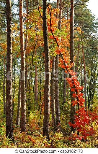 couleurs, automne - csp0182173
