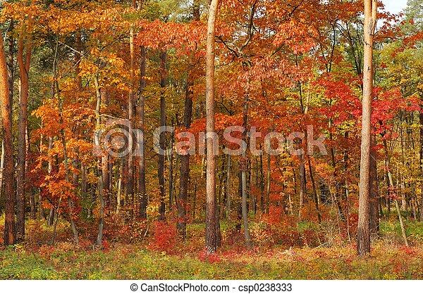 couleurs, automne - csp0238333