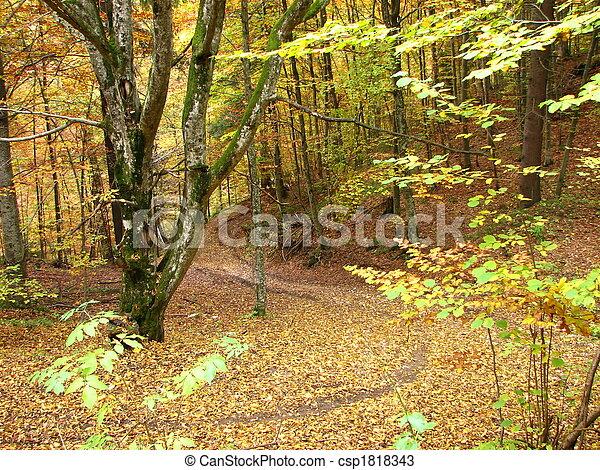 couleurs, automne - csp1818343