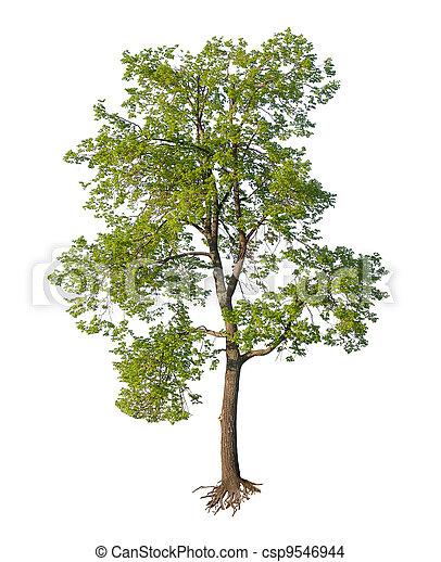 coupure, arbre, isolé, racines - csp9546944