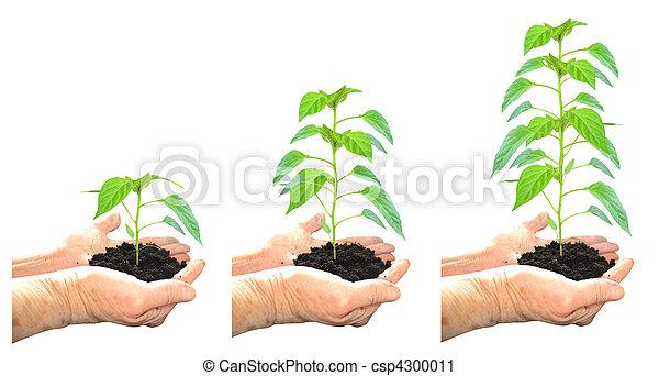croissant, plante - csp4300011