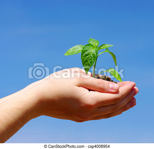 croissant, plante, vert - csp4008954