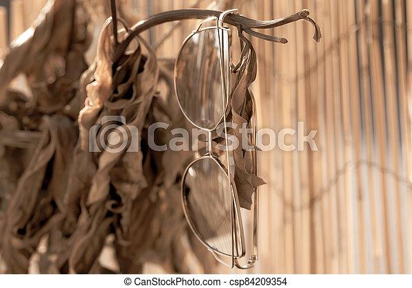dames, fence., pendre, foyer, oeil, profil, chat, grand, bambou, lunettes soleil, modèle, sélectif, lentilles - csp84209354