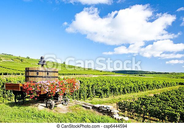 de, france, beaune, vignobles, cote, bourgogne, pommard - csp6444594