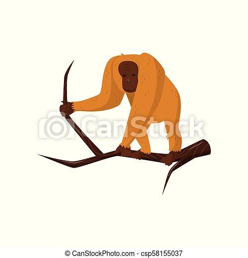 debout, brun, fourrure, singe, plat, bois, face., grand, orange, vecteur, jungle, orang-outan, sauvage, branch., animal, icône - csp58155037