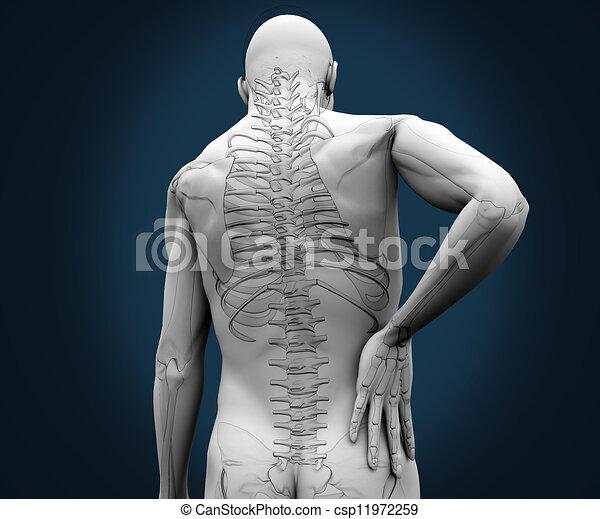 douleur, sien, avoir, dos, squelette - csp11972259