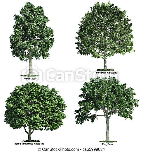 ensemble, isolé, contre, quatre, arbres, pur, blanc - csp5999034
