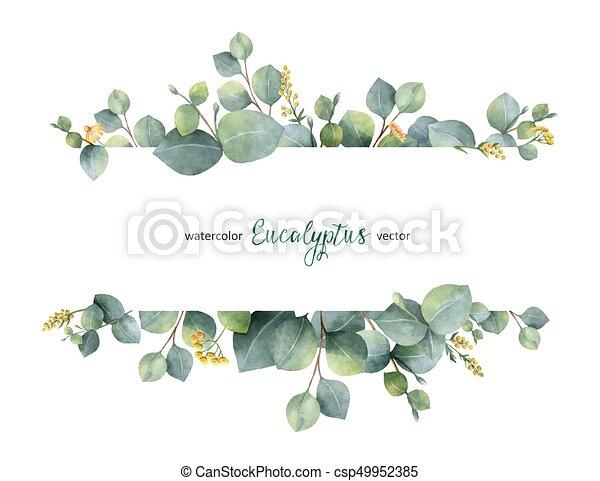 eucalyptus, branches, arrière-plan., vecteur, bannière, dollar, aquarelle, floral, feuilles, isolé, blanc, argent, vert - csp49952385