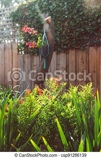 extérieur, arrière-cour, il, briller, plante, fleurs, rouges, tecoma, ensoleillé, lumière soleil - csp91286139