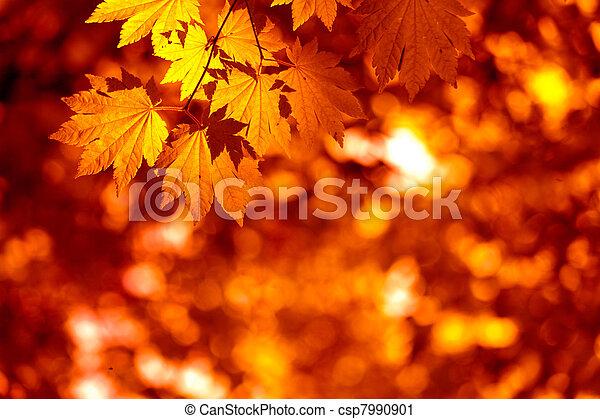 feuilles, automnal - csp7990901