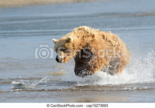 fish, sauter, grizzly - csp15273693