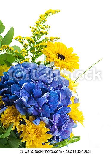 fleur bleue, bouquet, jaune, hydrangeas, asters, fond - csp11824003
