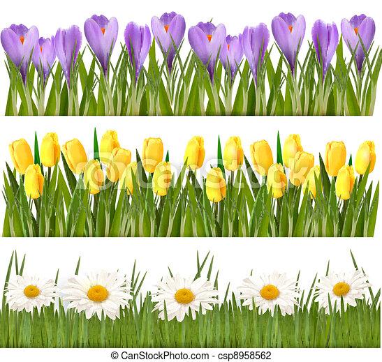 fleur, frontières, frais, printemps - csp8958562
