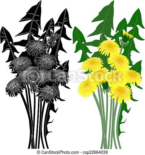 fleur, pissenlit - csp22664039