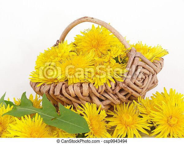 fleur, pissenlit, puissance - csp9943494