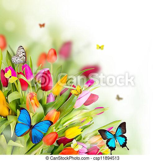 fleurs, printemps, papillons, beau - csp11894513